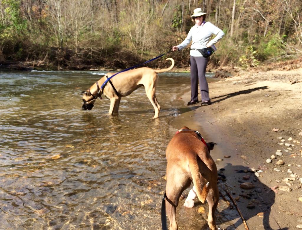 Asheville dog training