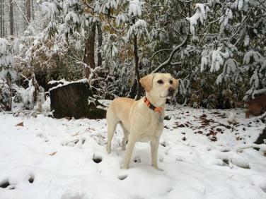 lili snow2