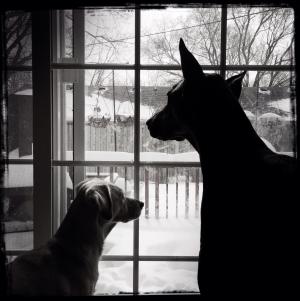 winterdogs2