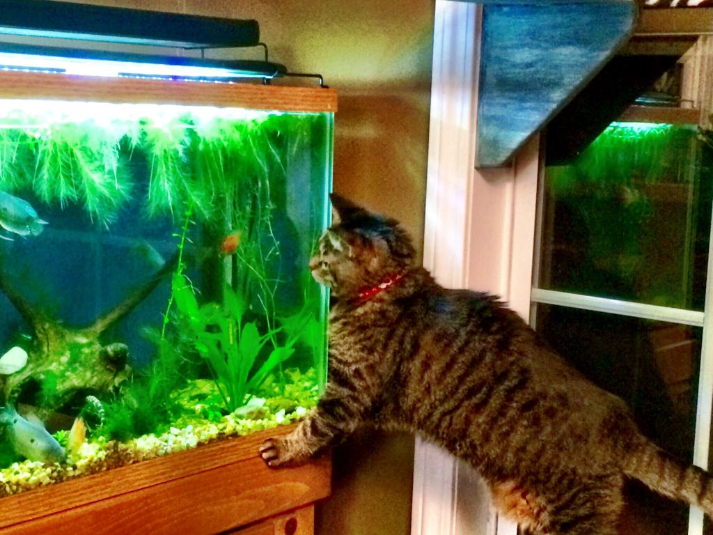 kindi fish smack